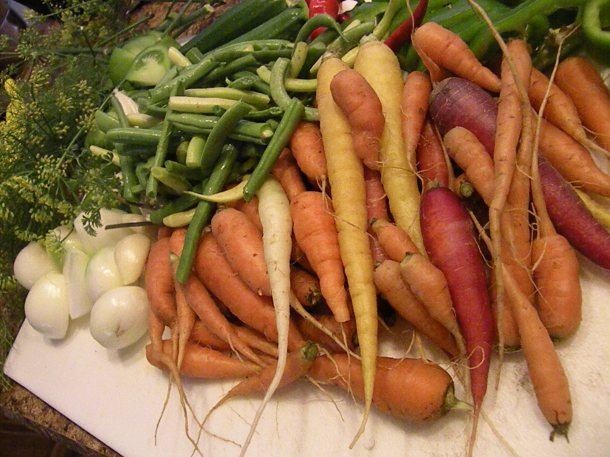Variety of veggies from the garden, ready for pickling.