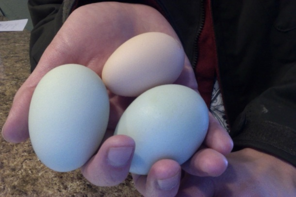 I went out in blizzard conditions to check on the chickens and found three lovely, warm eggs!