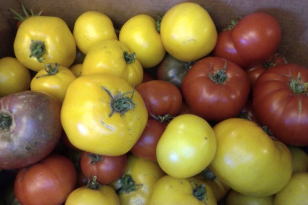 Tomatoes from our garden this summer!