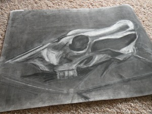 Cow skull, vine charcoal and white conte. RP 2002-2003.