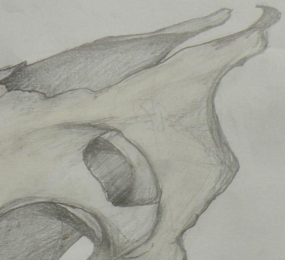 Cow skull Graphite, Rachel Brazil