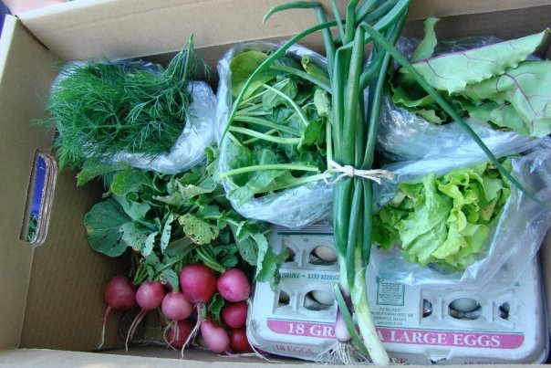 Farm fresh crops ready for CSA delivery.  Photo by Annie Carlson of Morning Joy Farms.