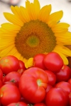 Building Leadership for Local FoodsDevelopment
